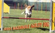 Gara Nazionale di Agility Dog - C.A.C.